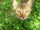 Наглый кот который тырил у нас еду!!!