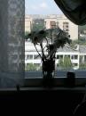 Больничное окно... На нем ромашки а вокруг в палате страх и ужас...