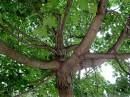 Под этим деревом «Отсосиновики» отдыхають;) фото 61