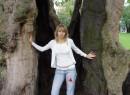 огромное дерево в парке