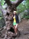 Ужасно старое и ядовитое дерево.