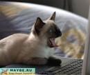 ВАУ!!!!!!!!! Какой котик! ; )