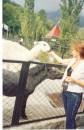 Пони ревнует ламу ко мне... Странно...