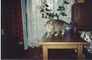 Любимый тигр. Домашний... МОЙ ЦЕЗАРРРРРЬ. Жаль, я не Клеопатра...