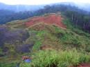 Гора в джунглях.