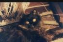 ет мой кот :)