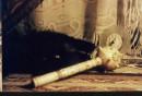 ет мой кот.....любит позировать :)