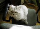 Это Мася мой кот....