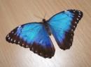 нам подарили живую бабочку :)