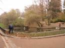 Стрийский парк. озеро с лебедьми