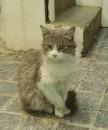 Grillio , Грижьо или Гриллио или просто Серый наш бродяга кот на работе