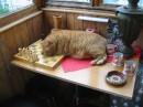 Когдато у меня был кот....
