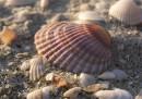 Ветер и тончайший звон кристаллов соли... положить ладонь, уронивши пальцы на холодный песок... быть и чувствовать...