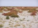 Октябрь... пустыня окрасилась ярким и свежим... здесь происходит осень...