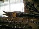 Aligator v zasyshenomy vudi ;)