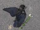 весь мир усеян мертвыми птицами