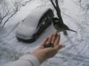 вот так мы кормим птичек зимой.....