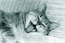моя утрення, дневная, и  вечерняя радость.....))(КИЕВ-м19)