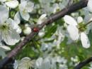 Весна..)))