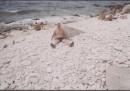 на море остров Тарханкут