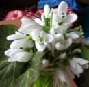 Нежные и удивительные..... Люблю, жуть.....  Нет, не Он подарил, как же - сама себе купила!;)))))))