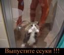 ...вот такой он...мой котик....