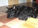 моя любимая собака.. может кто то узнает в ней свою??))