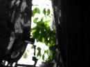 Ей приснился сон... всё в нём было неясным и чёрно-белым, но сквозь эту нечеткостьона ясно различала зелёное пятно...