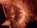 Моя котяра)))))