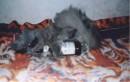ето мой любимый котик Шашлык