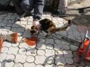 """Детки с котенком играют в гестапо."""")"""