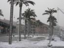 Пальмы в снегу ;)