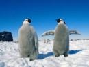 Это мы, пингвины :)