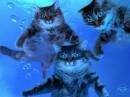 """""""Морские котики"""""""
