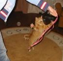 не подходи ко мне близко, я Тигрёнок, а не киска :)))
