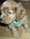 моя милая собака!!!!!!!!!!!!!!!!!