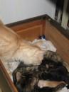 А вот это моя семья! У нас четыре котят. Двое похожи на меня а двое на нее! А вон тот, ну, просто вылитый Я!