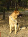 Мой пёс - Герда!