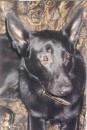 Мой зверь №2 Азур