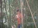 В бамбуковом лесу.....