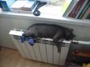 Моя кошка ксюха!