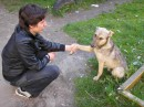Ещё одна бродячая воспитанная собачка )))