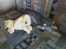 Маська наигралась и заснула.
