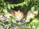 Ap'at' kievskij zoopark... eto kstati tot den' kogda muzhika sozhrali... :) chasika za 2 do etogo...
