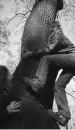 миня Натахо загнала на дерева (((