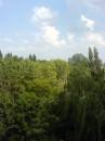 Мой двор - самый зелёный! :)