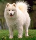 Хочу собаку!!!