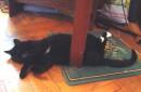 говорите шепотом..., мой кот спит)))