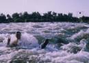 28июля2003 года:) я купаюсь в пороге,тут у нас проходили соревнования по гребному слалому:)нога у меня черная потому,что она в специальных сапожках:) обожаю эти места:) г.Первомайск,Николаевская область:)