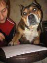 Моя любимая собачка)))...добрейшее существо